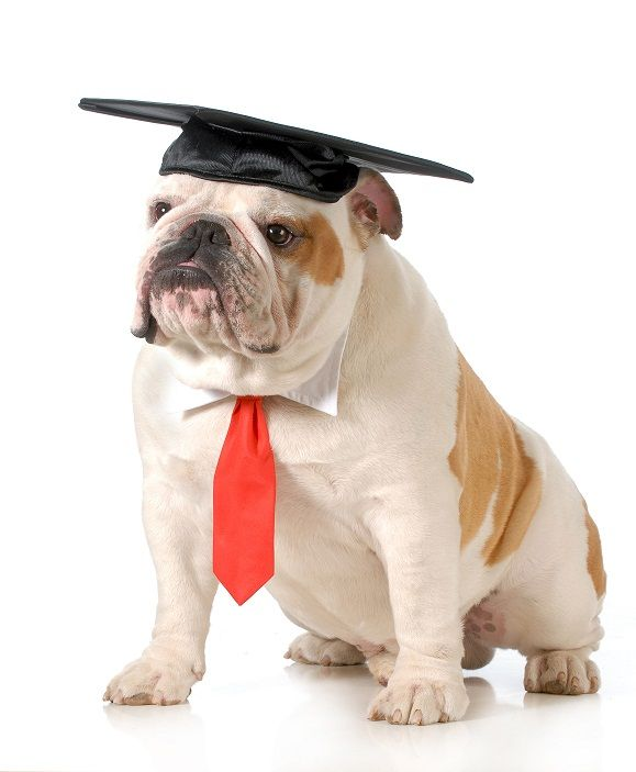 Dog wearing graduation cap